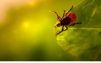 Parasiten, wie kann man sie natürlich in Schach halten?