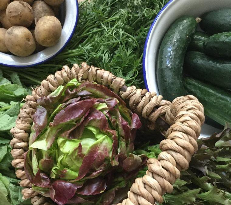 Salattypen: kein langweiliges Gemüse!